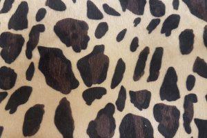 Leopardo 0AQ